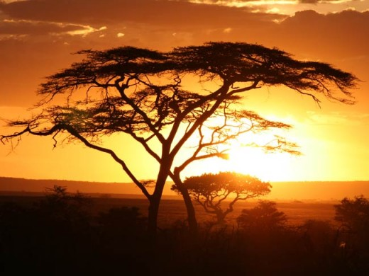 African-Tree-Ghana-Nigeria